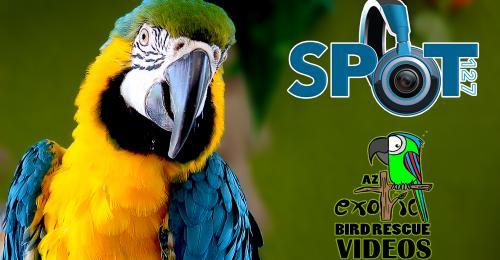 AZ Exotic Bird Rescue